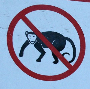 no_monkeys